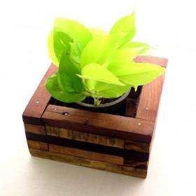 AGRICOM WOOD BOX